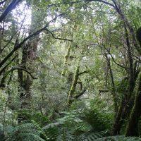 Durchblick durch den Förderdschungel